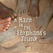 Book Trailer: A Hare in the Elephant's Trunk